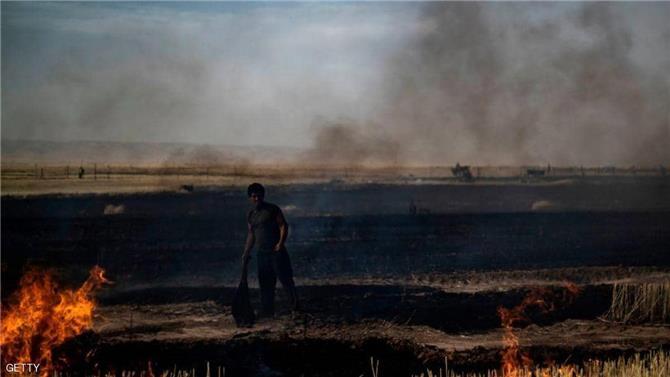 ترامب يأمر بحرق هكتارات من حقول القمح في سوريا