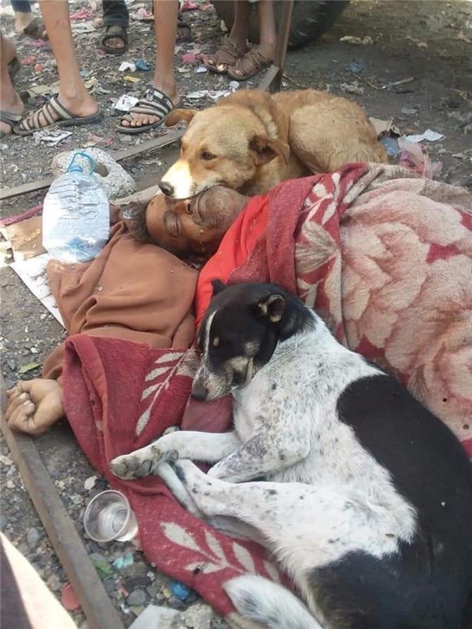 الوفاء في صورة.. ماذا فعلت كلاب ضالة بجثة يمني بعد وفاته