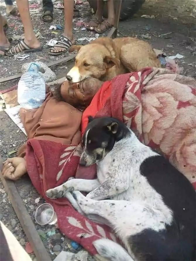 صورة تهز اليمنيين.. وفاة شخص والكلاب تحتضن جثمانه بحزن عميق