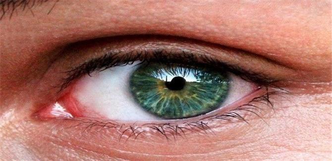 الخلايا الجذعية من الموتى قد تساعد في إعادة البصر للمكفوفين
