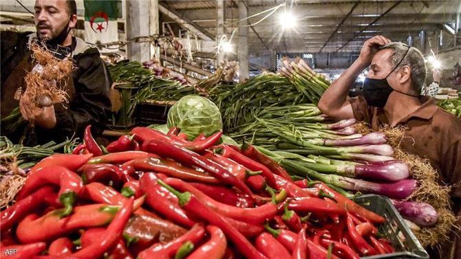 كيف كسبت الجزائر رهان الأمن الغذائي؟.. خبراء يشرحون